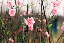 photo spring