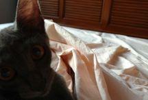 minhas gatas / gatos