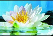 """Feng shui. Feng šuej. / Feng Shui (česky Feng-šuej) se skládá ze dvou čínských slov """"feng"""" (vítr) a """"shui"""" (voda). Feng Shui je umění, které vzniklo cca před 5.000 lety ve staré Číně a v podstatě se jedná o umění člověka žít v harmonii sám se sebou a vlastním okolím. Feng Shui is made up of two Chinese words """"feng"""" (wind) and """"shui"""" (water). Feng Shui is an art that originated about 5,000 years ago in ancient China and is basically the art of man to live in harmony with himself and his own surroundings."""