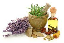 receita ervas medicinais