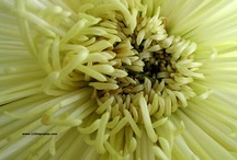 Beautiful Flowers, 1 / 100 pins of Flowers, Plants