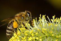 abejas / Sitio para difundir la apicultura y la bondad de los productos de la colmena. Site to disseminate beekeeping and goodness of bee products.