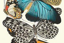 Lovely flutters