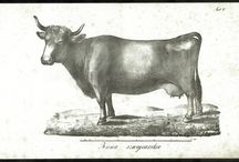 Public domain: Animal prints