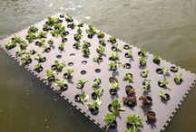 Floating_wetland
