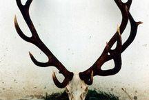 Skulls & Antlers