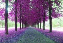 PURPLE- my favorite color / All amazing things that are purple