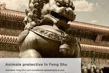 Animale protectoare / Animale protective in feng shui. Vizitează www.fengshui-market.ro pentru mai multe detalii.