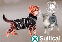 Suitical / An Alternative to the cone of shame!
