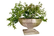 floral and plant arrangements