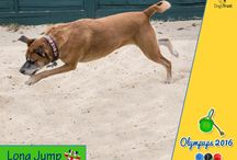 Olympups 2016 / Dogs Trust is celebrating the success of Team GB at the Rio Olympics by putting on their own version of the world's greatest sporting event – the Olympups, to keep their homeless hounds entertained at the Rehoming Centre whilst they await loving homes of their own.