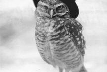 oWLs / i just love them.....
