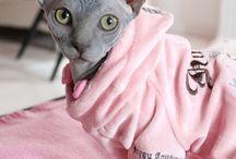 Сфинксы / Подбираю себе котенка