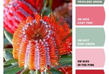 Цвета краски