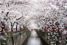 must to visit in Japan