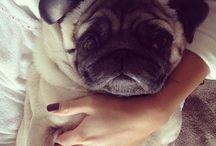 Pugs<3
