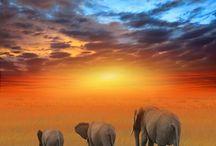 Africa / by Eli Adato