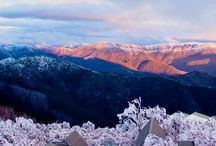 Magical Mt Buller