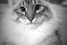My Siberian Boy / Senya