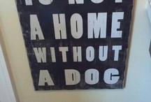 Psy/dekoracja