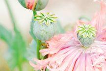 Pretty Things / by Susan Johnson-Tutt