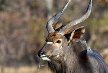 Thaba Khaya Sable Ranch Memoirs / Enjoy the Wildlife on your stay at Thaba