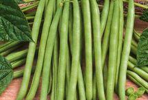 Semences en tous genres / Découvrez la multitude de semences que vous pouvez vous procurez sur notre site marchand : http://www.jardinerie-bergon.fr/53-semence