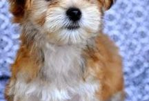 Honden en puppy