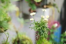 garden, indoors!