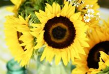 Sunflowers / by Donna Hopper