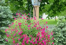 Hanging Baskets / by Growing The Home Garden