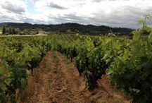 Vineyards / Images of our Estate vineyards in the Alexander Valley.