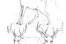 Tutorial - Deer