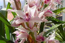 Tetéia flores