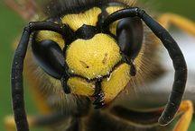 Wasp stings