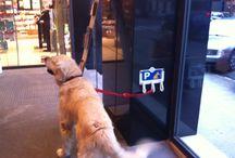 Proyectos cumplidos de la Farmacia / Parking para perros.