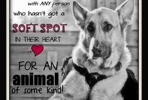 Animals I Love ...