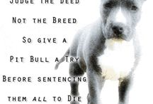 Stop Breed Discrimination / by Megan Deatherage