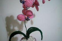 Le mie orchidee...sono per sempre