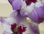 Flowers  / by Linda Kupstas