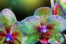 Flowers / by Diane Minchew