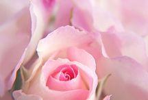 Mooie bloemen / Gewoon mooi