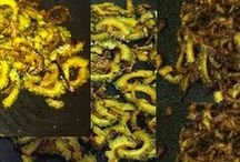 Pavakkai Varuval - Bitter Gourd Fry Recipe