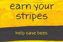 Bees / Bees, bumble bees, native bees