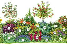 vtaci na zahrade