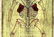 Ilustraciones de Anatomía antiguas