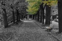 Si sta come d'autunno, sugli alberi le foglie