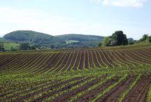 Fields around Mitcheldean / Gorgeous, lovely fields in Mitcheldean, Gloucestershire