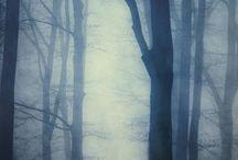 wood  tree  plant / by Yukie Takedomi