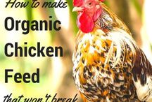 Organic chook food